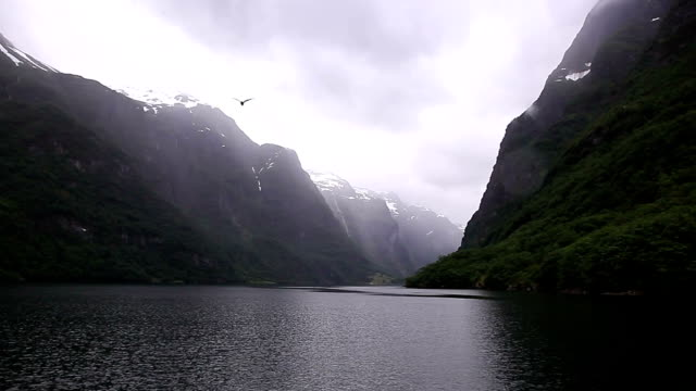 glacier sightseeing at Norway fjord with boat and birds flying video