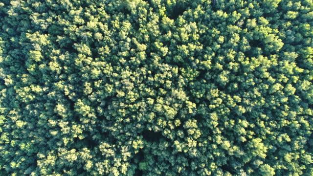 Glade hidden in a dense forest video