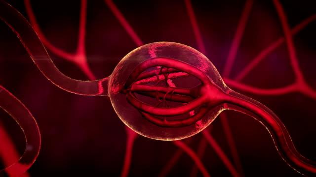 ghiandola produce ormoni - adrenalina video stock e b–roll