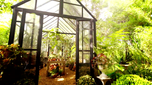 Glass greenhouse in summer time surrounded with green trees.