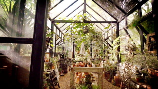 Glass greenhouse with a lot of plants.