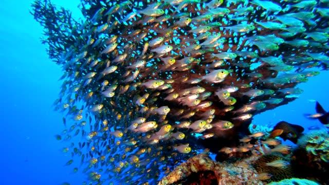 vídeos de stock, filmes e b-roll de peixe-vidro água azul subaquática - equipamento de esporte aquático