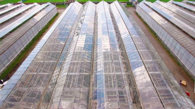 spülungen für blumen, gemüse und marihuana anbau. moderne landwirtschaft von oben. kamerafahrt über garten. - gewächshäuser stock-videos und b-roll-filmmaterial