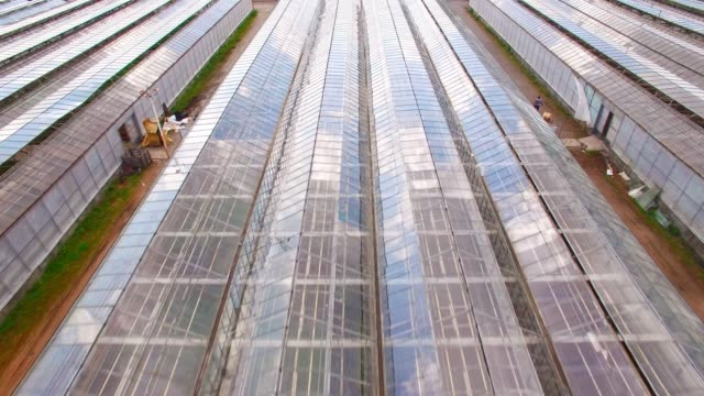 Glasshouses for flowers, vegetables and marijuana growing. Modern agriculture from above. Camera flight over garden. Glasshouses for flowers, vegetables and marijuana growing. Modern agriculture from above. Camera flight over garden. biomass renewable energy source stock videos & royalty-free footage