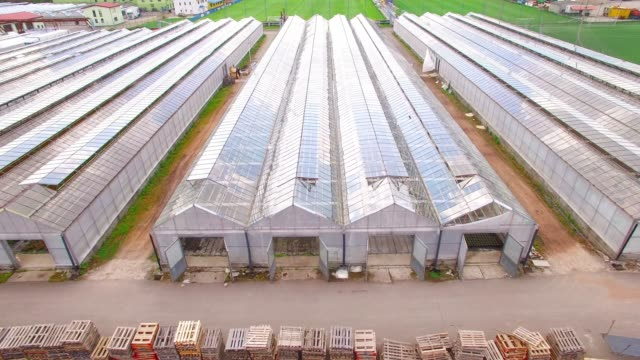 glasshouses for flowers, vegetables and marijuana growing. modern agriculture from above. camera flight over garden. - биомасса возобновляемая энергия стоковые видео и кадры b-roll