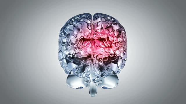 Glassy brain Glassy brain cerebellum stock videos & royalty-free footage