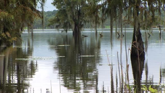 Glassy Swamp Waters