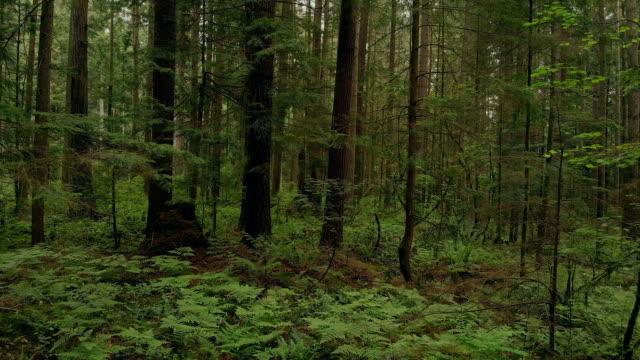 vidéos et rushes de glisser lentement dans la forêt verte - nord