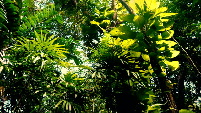 Gliding Under Rainforest Plants And Trees video