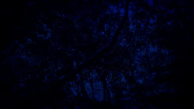 Gliding Under Tropical Rainforest Trees In The Dark