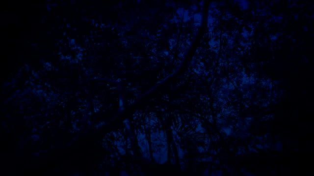 Gliding Under Tropical Rainforest Trees In The Dark video
