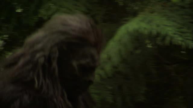 scorcio di sasquatch - yeti video stock e b–roll