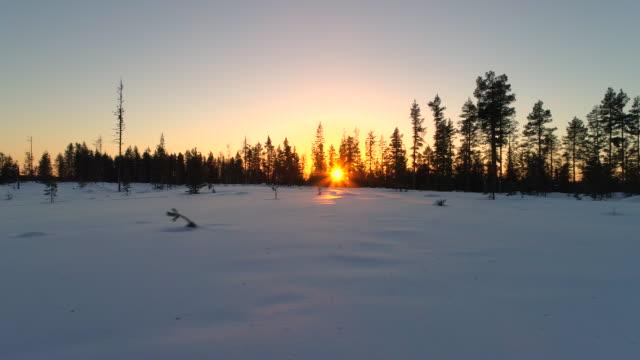 close up glitzernde schnee decke verkleidung feld nahe kiefernwald bei sonnenuntergang - schneeflocke sonnenaufgang stock-videos und b-roll-filmmaterial