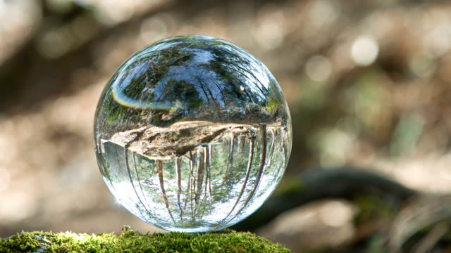 globe resting in a forest - glass world video stock e b–roll