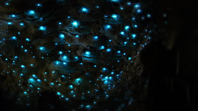 Glow Worms time-lapse CU Motion control time-lapse of bioluminescent glow worms twinkly in brilliant color in dark cave interior cave stock videos & royalty-free footage