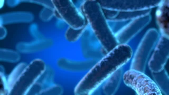 vídeos y material grabado en eventos de stock de bacterias brillante - bacteria