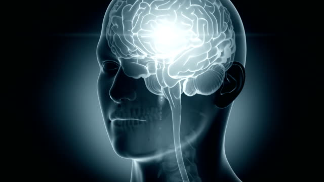 Glowing brain Glowing brain in 3D cerebellum stock videos & royalty-free footage