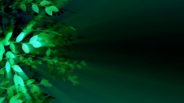 Glowing Shadow Tree Loop 005 video