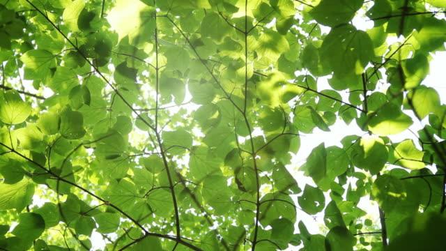 Glowing sunshine through canopy