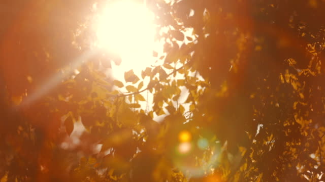 Glowing sunshine through Leaves video