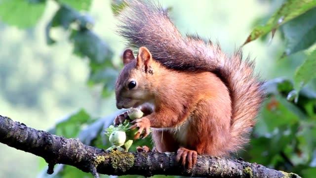 glutton - nuts 個影片檔及 b 捲影像