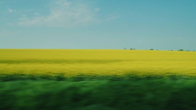 gå längs blommande gula rapsfält - råvaror för biodrivmedel. visa från bilfönstret - ekosystem bildbanksvideor och videomaterial från bakom kulisserna