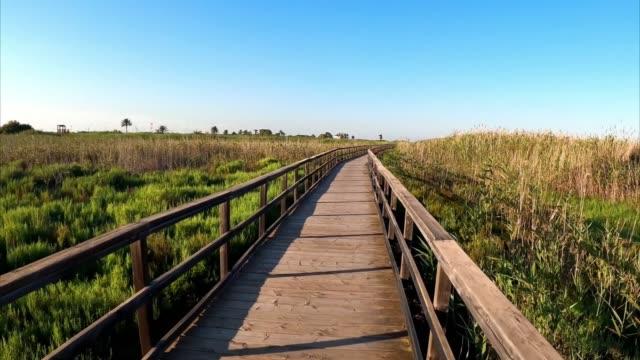 pov going through board walkway amidst vegetation - пешеходная дорожка путь сообщения стоковые видео и кадры b-roll