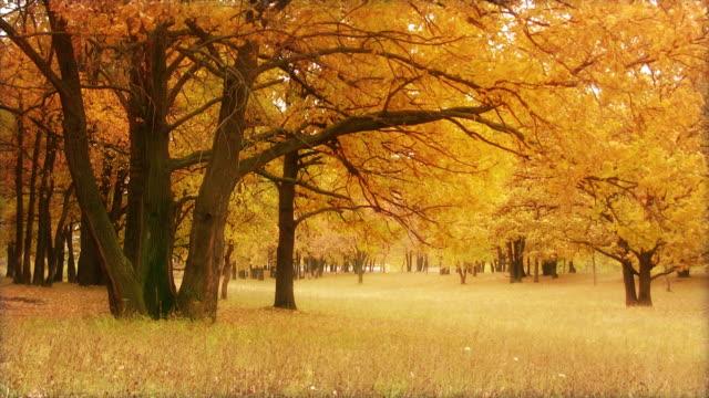 Gold oak video
