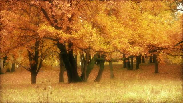 Gold oaks video