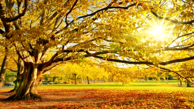 Gold sunny autumn in a park