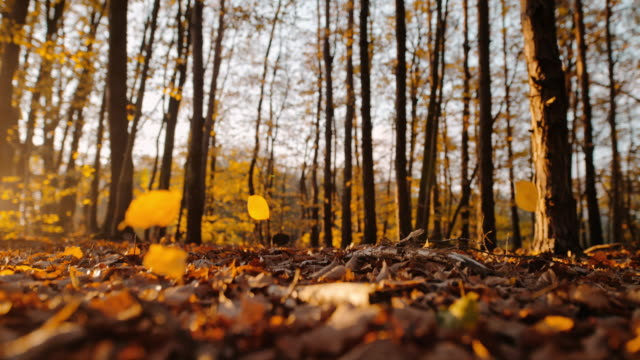 MS SUPER SLOW MOTION TIME WARP EFFECT golden autumn leaves falling in sunny tranquil forest SUPER SLOW MOTION TIME WARP EFFECT golden autumn leaves falling in sunny tranquil forest. Lockdown. Slow motion. fall stock videos & royalty-free footage