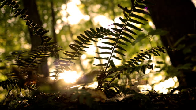 Golden beautiful sunlight shining over the prehistoric jungles of the Mesozoic video