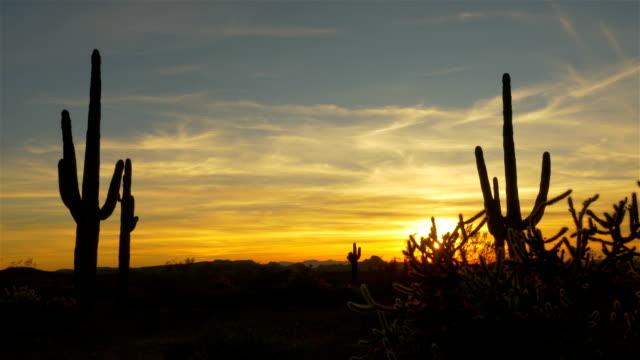 Golden evening sun shining through wild cactuses in desert wilderness video
