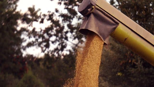 golden field harvesting - roggen stock-videos und b-roll-filmmaterial