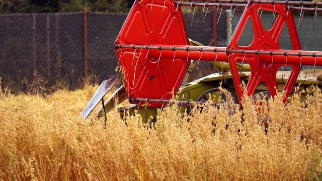 vidéos et rushes de récolte des champs d'or - seigle grain