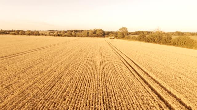 Golden Fields C part 2/2