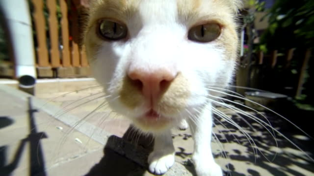 Golden fur cat and a brown labrador sniffing camera lens video