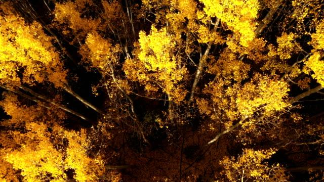 vídeos de stock, filmes e b-roll de luz dourada da hora que brilha em árvores coloridas - condado de pitkin