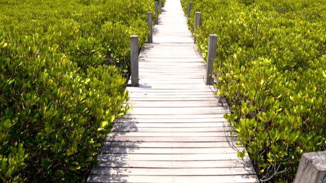 Golden Mangrove Field