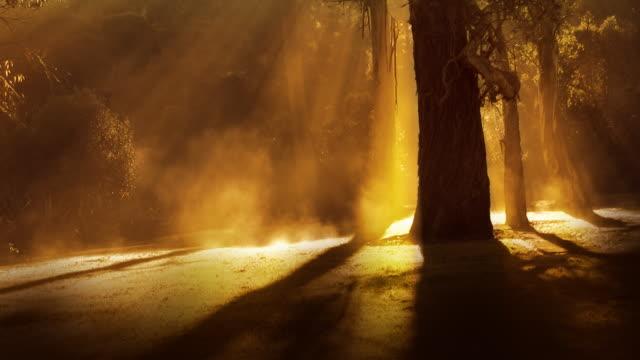 Golden misty forest video