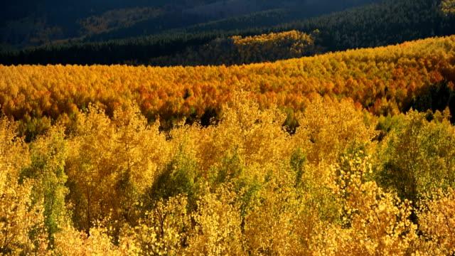 vídeos de stock, filmes e b-roll de vale dourado da montanha-uma opinião do por do sol do outono do close-up do bosque dourado brilhante do aspen que brilha em um vale da montanha na base da escala de sawatch. twin lakes, leadville, colorado, eua. - independence pass