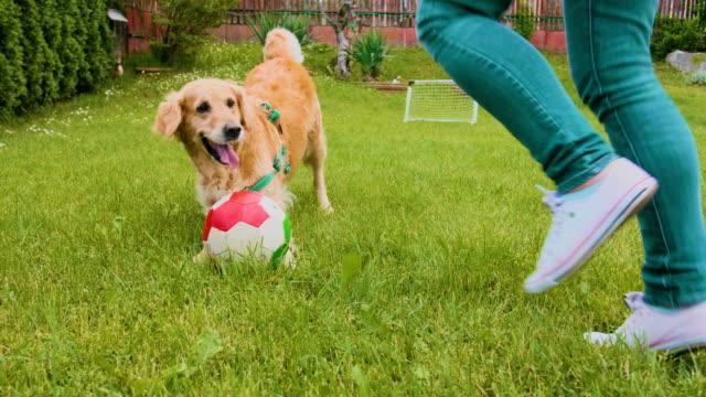 golden retriever hund och kvinnliga ägare leker med en boll utomhus - gräsmatta odlad mark bildbanksvideor och videomaterial från bakom kulisserna