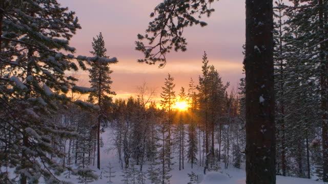 vertigo effect: golden sun setting behind snowy pine forest on winter evening - хвойное дерево стоковые видео и кадры b-roll