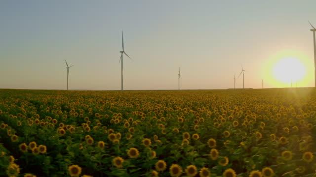 vídeos y material grabado en eventos de stock de girasoles dorados con wind turbine farm al atardecer - generadores