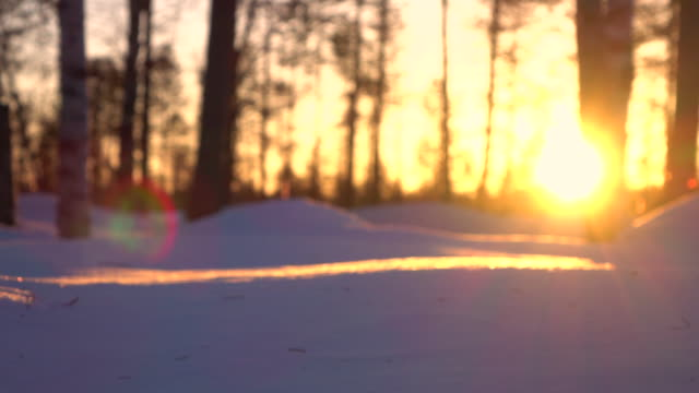 lens flare: golden sunrise on beautiful winter morning in backcountry woods - conifera video stock e b–roll
