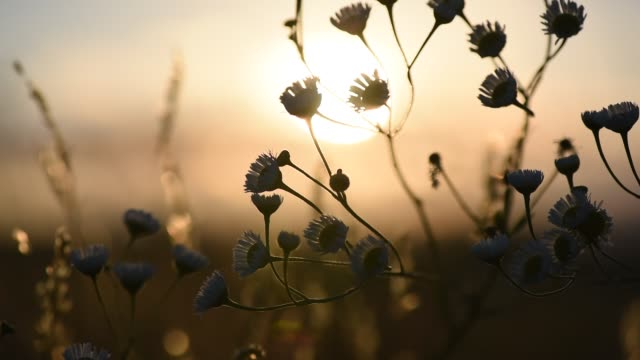 stockvideo's en b-roll-footage met gouden zonsondergang - plantdeel