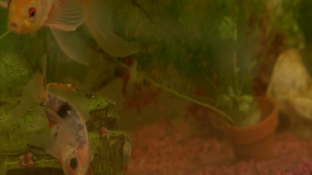 goldilocks and the three bears aquarium school - ichthyologie stock-videos und b-roll-filmmaterial