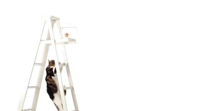 vídeos de stock, filmes e b-roll de goldfish e gato - felino