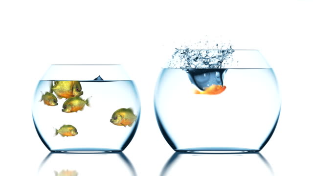 Goldfish Escapes from Piranhas - vídeo