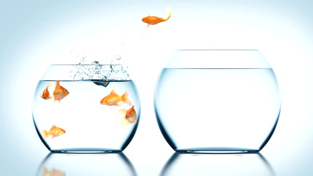 goldfish jumps into another fishbowl - coraggio video stock e b–roll